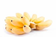 金黄香蕉或蛋香蕉是在白色被隔绝的背景健康Pisang Mas香蕉果子食物的芭蕉科家庭 免版税图库摄影
