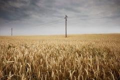 金黄麦地在乡下 免版税库存图片