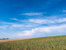 金黄麦子和黑麦调遣与风轮机反对蓝天 图库摄影
