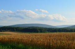 金黄麦田和蓝天在一个晴朗的夏日 库存图片