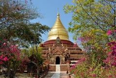 金黄Dhammayazika塔和开花的tr的美丽的景色 图库摄影