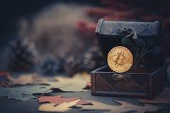 金bitcoin 珍宝-隐藏货币神奇秋叶 在黑暗的背景的老木箱真正金钱 温暖定调子 库存图片