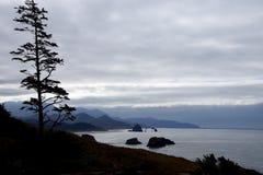 针叶树剪影反对海岸的 免版税库存图片
