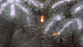 针叶树和大雪 影视素材