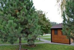 针叶树树照片在房子附近的 免版税库存照片