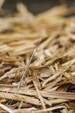 针在干草堆 库存图片