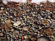 针杉木,烘干叶子和石头-享用的完善的组合 免版税图库摄影