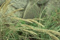 钉和绿草在被弄脏的背景老石墙上 图库摄影