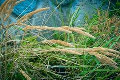 钉和绿草在被弄脏的背景老石墙上 免版税库存照片