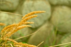 钉和绿草在被弄脏的背景老石墙上 免版税库存图片