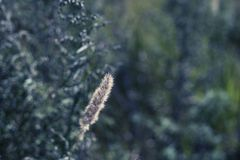 钉和绿草在被弄脏的背景老石墙上 库存照片