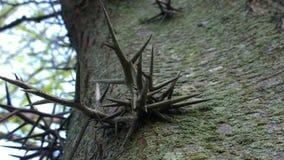 钉涌现的树 免版税图库摄影