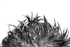 钉牢的头发 免版税库存照片