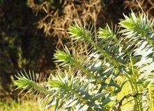 钉牢装饰植物绿色叶子在房子前面的在草地 免版税库存照片