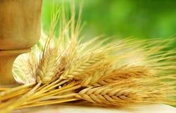 钉牢麦子 免版税库存照片