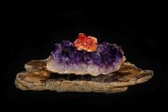 钒铅矿,紫色在云母 免版税库存照片