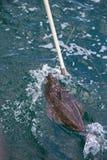 钓鱼与多钩长线 库存图片
