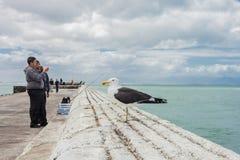 钓鱼与标尺的少年和流利地读出港口墙壁 免版税库存图片