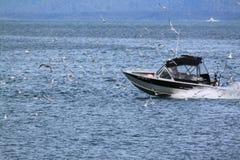 钓鱼与鸥 免版税库存照片