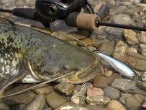 钓鱼与baitcasting的卷轴 图库摄影