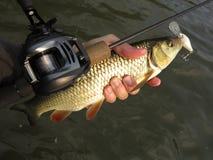钓鱼与baitcasting的卷轴 免版税库存图片