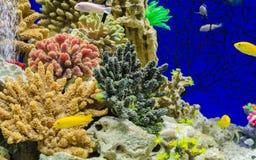 钓鱼丽鱼科鱼蜂鸟和美丽的水族馆装饰 库存图片