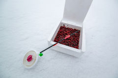 钓鱼和标尺的红蚯蚓 库存图片