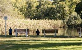 钓鱼在一个晴天在Gardners公园 免版税库存图片