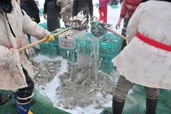 钓鱼在一个冻湖 图库摄影