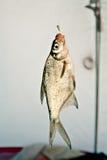 钓鱼在冬天冰渔的一个勾子 免版税库存照片
