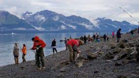 钓鱼在复活海湾的人们三文鱼在Seward 免版税图库摄影