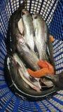 钓鱼在天 免版税图库摄影