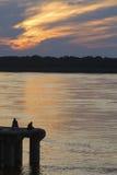 钓鱼在日落的两个人 免版税库存图片