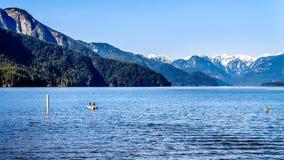 钓鱼在有金黄耳朵的雪加盖的峰顶,兴奋峰顶和海岸山脉的其他山峰的Pitt湖 免版税库存照片