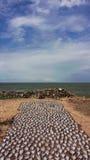 钓鱼在海滩烘干的小条斯里兰卡 免版税图库摄影