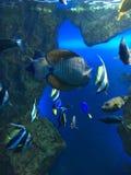 钓鱼在特权的水族馆,海鱼 库存照片
