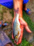钓鱼在罗马尼亚 库存图片