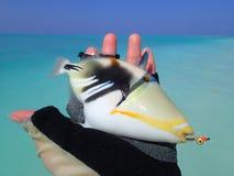 钓鱼在马尔代夫 免版税图库摄影