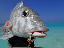钓鱼在马尔代夫 免版税库存图片
