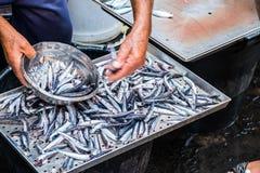 钓鱼在鱼市上在卡塔尼亚,西西里岛 免版税图库摄影