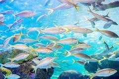 钓鱼学校 免版税库存图片