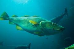 钓鱼得在水面下 免版税库存照片