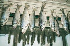 钓鱼战利品,啤酒的快餐 库存图片