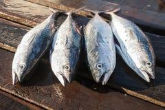 钓鱼新鲜 免版税库存照片