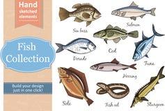 钓鱼汇集Dorado鳗鱼金枪鱼,三文鱼大比目鱼鲱鱼鲈鱼鳕鱼鲟鱼 库存照片