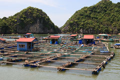 钓鱼浮动的村庄 库存照片