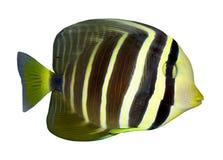 钓鱼热带的礁石 免版税图库摄影