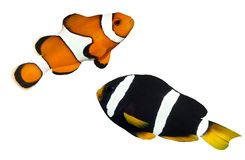 钓鱼热带的礁石 免版税库存照片