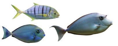 钓鱼热带 免版税库存照片