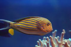 钓鱼热带 免版税库存图片